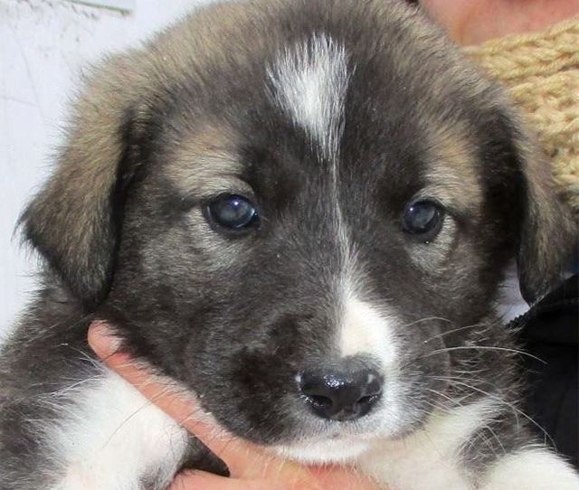 Koritsi-mou pups